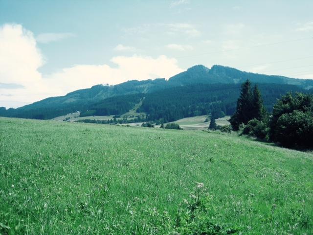 Alpspitzblick: